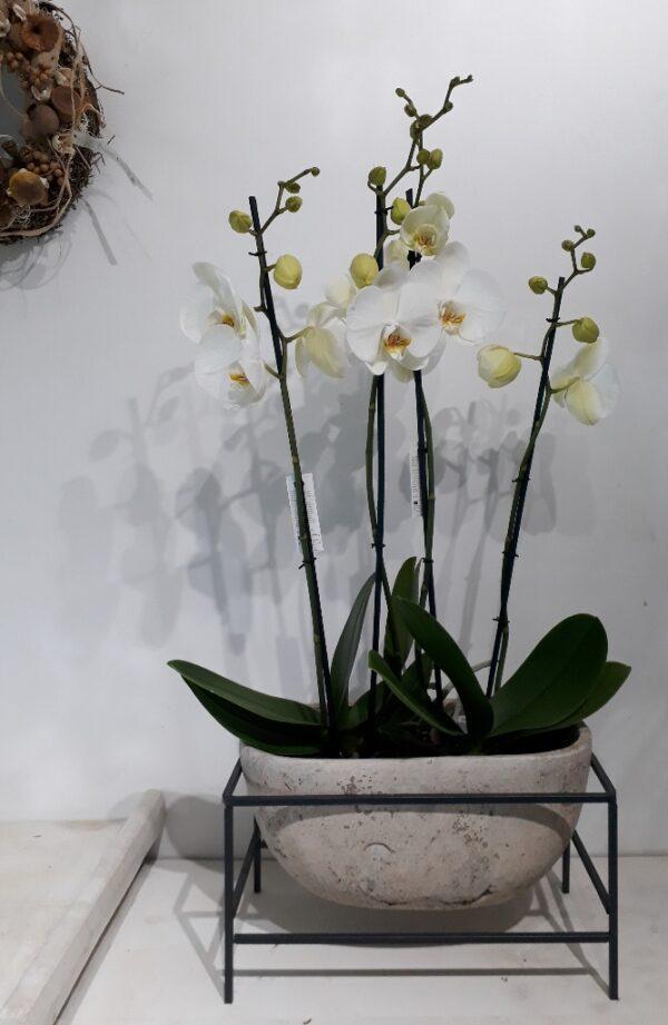 Schaal met orchidee